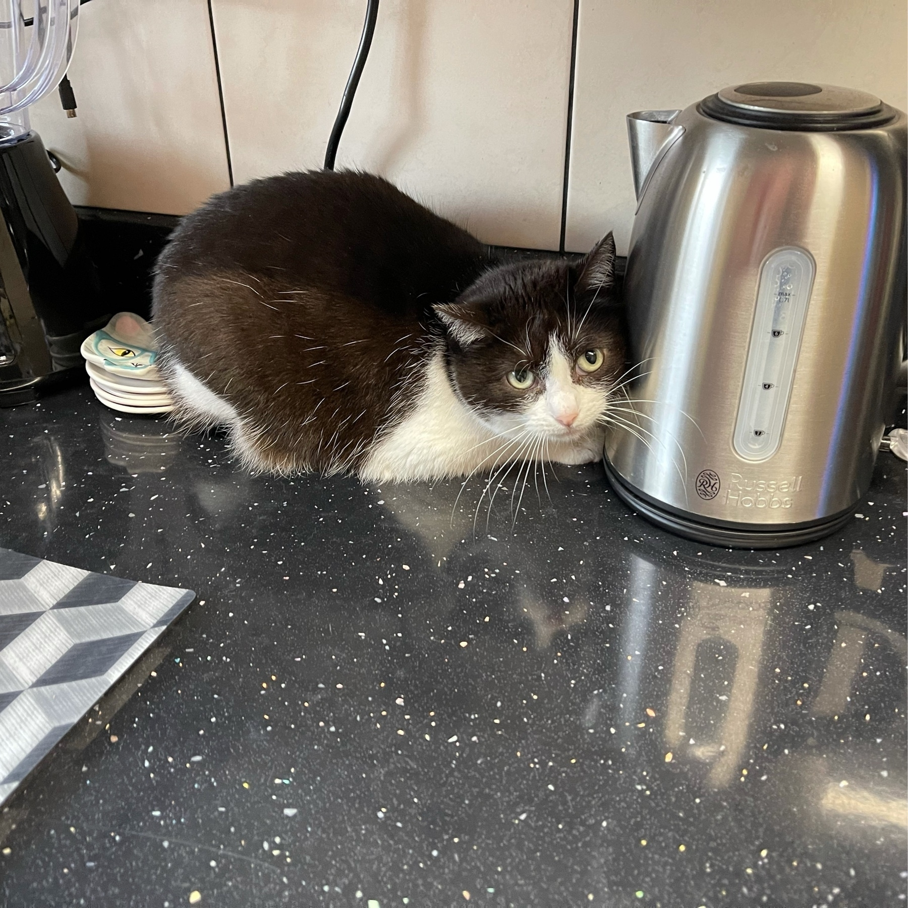 Black and white cat on a black kitchen counter, between the tea kettle and spoon rests.